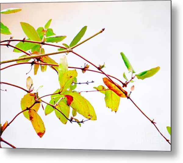 Green Twigs And Leaves Metal Print