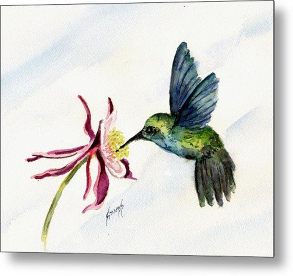 Green Violet-ear Hummingbird Metal Print