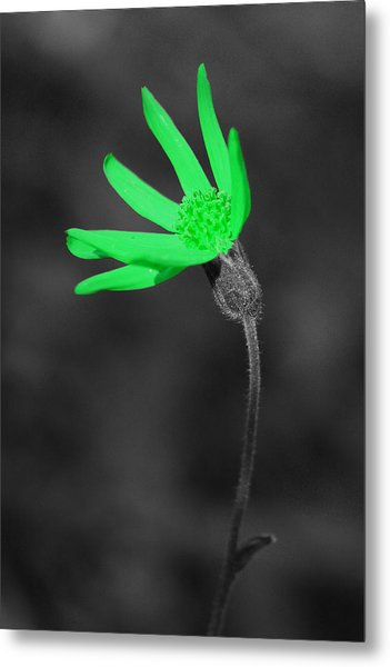 Green9 Metal Print