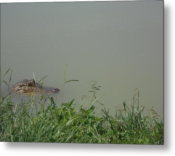 Greenwood Gator Farm Metal Print