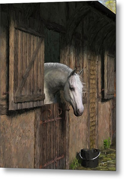 Grey Horse In The Stable - Waiting For Dinner Metal Print