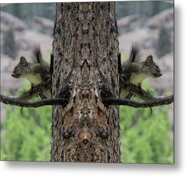 Grey Squirrels On The Look Out Metal Print