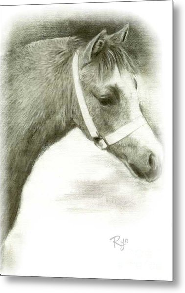 Grey Welsh Pony  Metal Print
