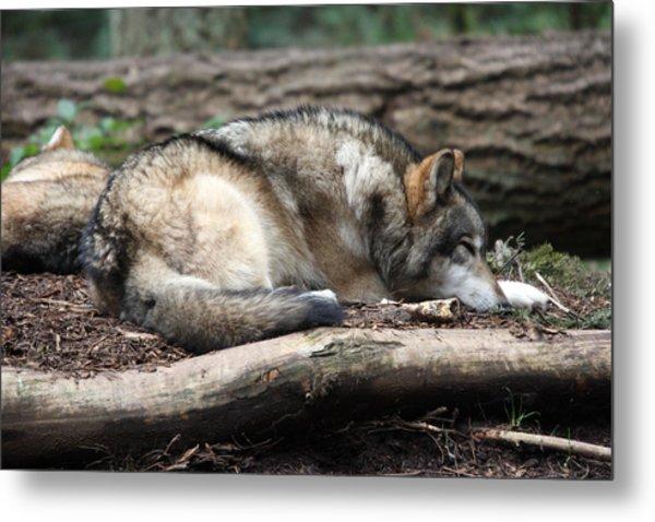 Grey Wolf - 0011 Metal Print