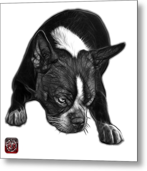 Greyscale Boston Terrier Art - 8384 - Wb Metal Print