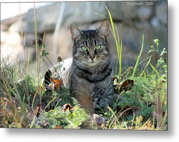Greyson In Autumn Grass Metal Print