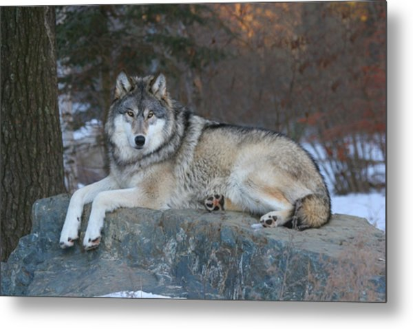 Grizzer Intelligence Personified Metal Print