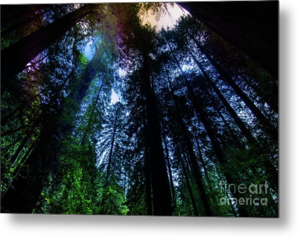 Grizzly Creek Redwood Grove Metal Print by Blake Webster