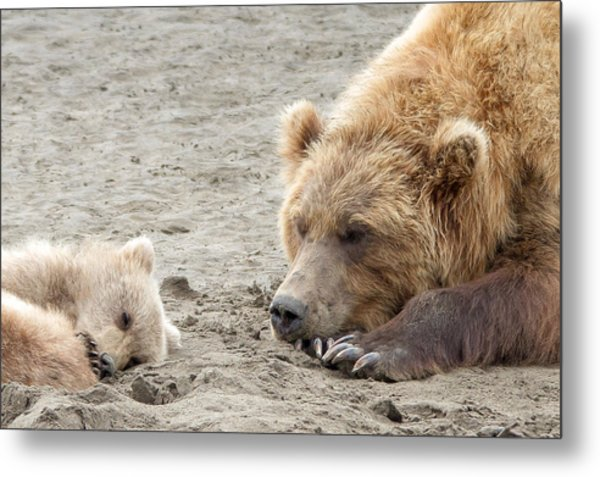 Grizzly Mom And Cub Metal Print