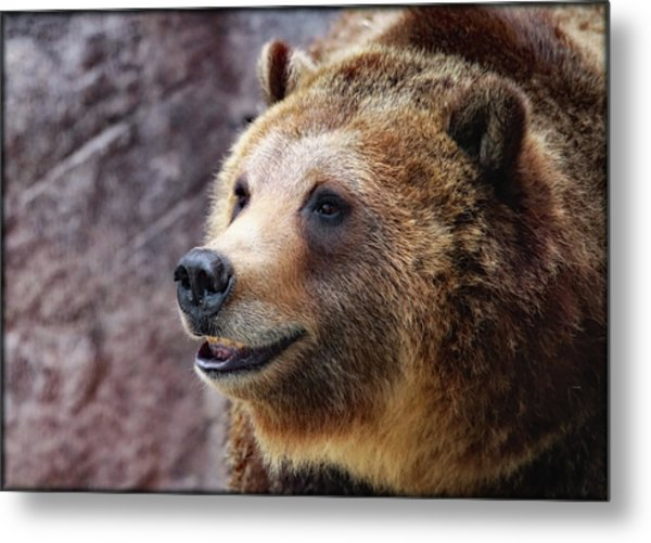 Grizzly Smile Metal Print