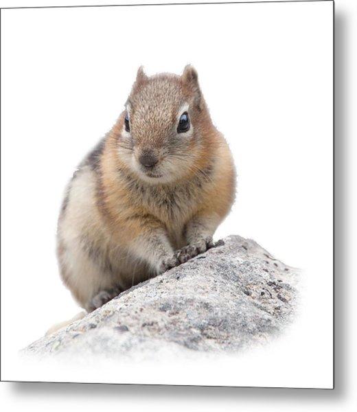 Ground Squirrel T-shirt Metal Print