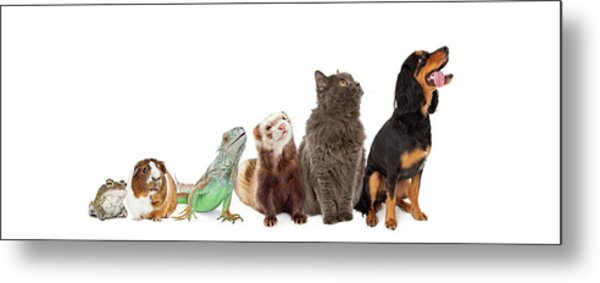Group Of Pets Looking Up And Side Banner Metal Print