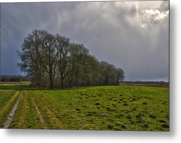 Group Of Trees Against A Dark Sky Metal Print