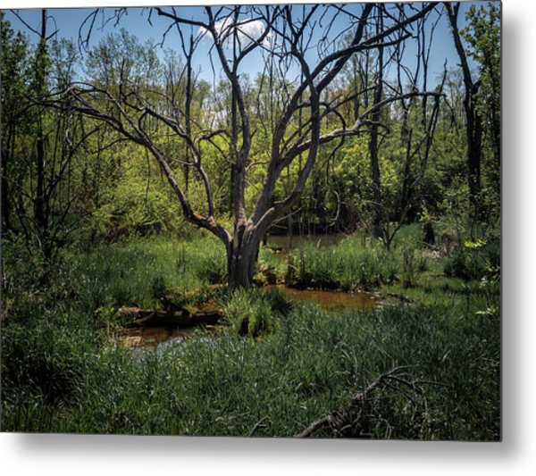 Growning From The Marsh Metal Print
