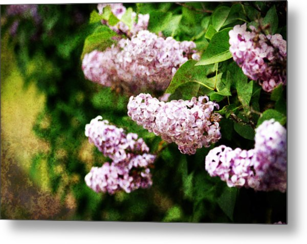 Metal Print featuring the photograph Grunge Lilacs by Antonio Romero