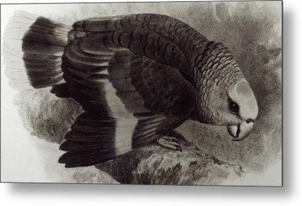 Guilding's Amazon Parrot,  Metal Print
