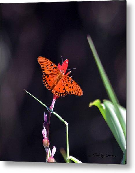 Gulf Fritillary Butterflyl Metal Print
