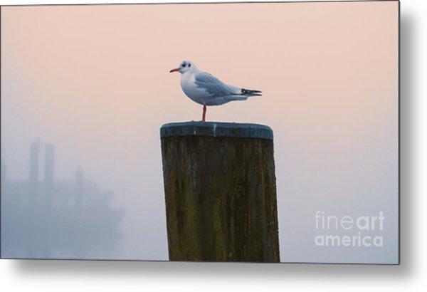 Gull And Fog Metal Print