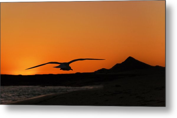 Gull At Sunset Metal Print