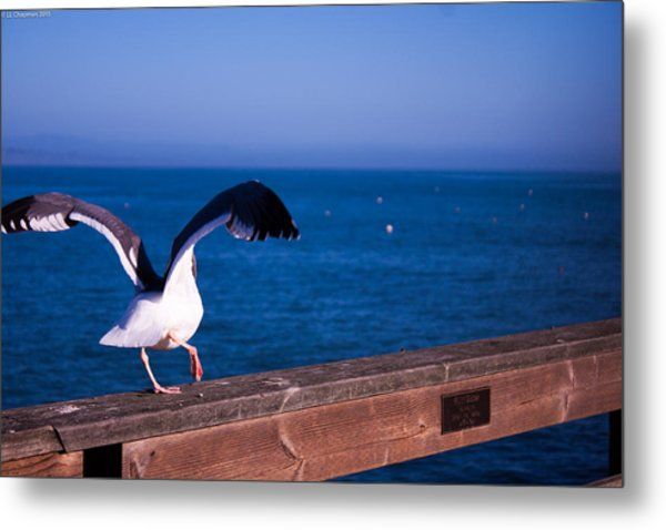 Gull Dance Metal Print