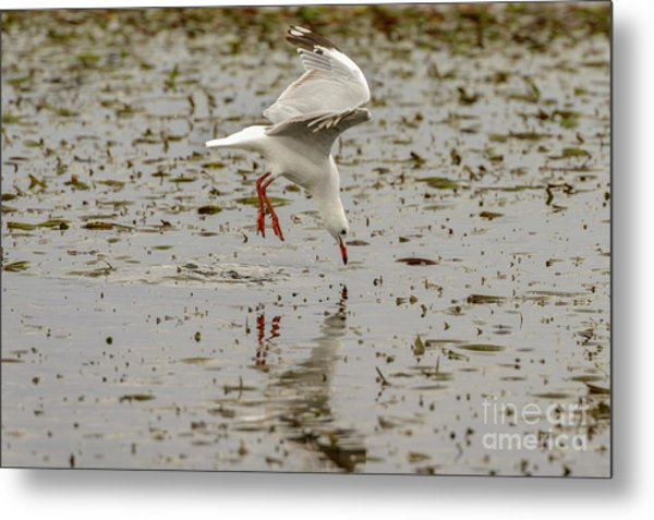 Gull Fishing 01 Metal Print