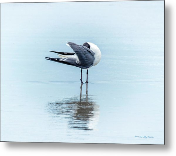 Gull Reflection Metal Print