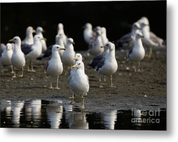 Gulls At The Beach Metal Print