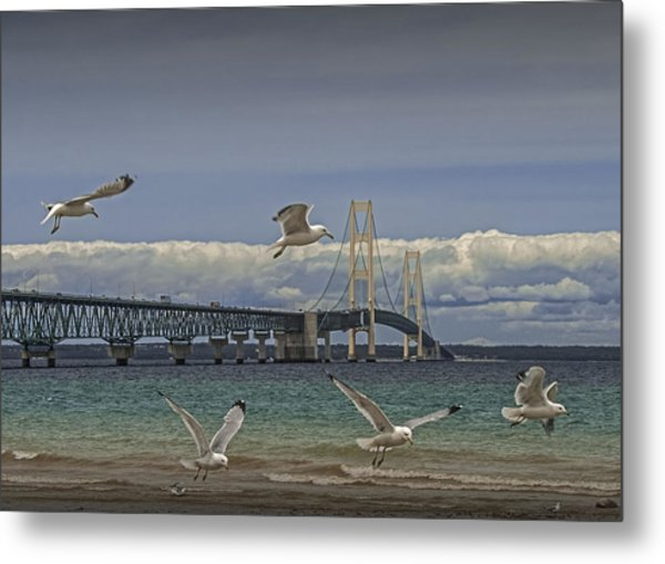 Gulls Flying By The Bridge At The Straits Of Mackinac Metal Print