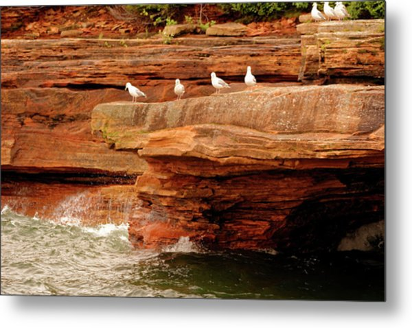 Gulls On Outcropping Metal Print