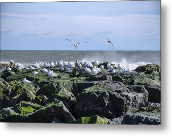 Gulls On Rock Jetty Metal Print