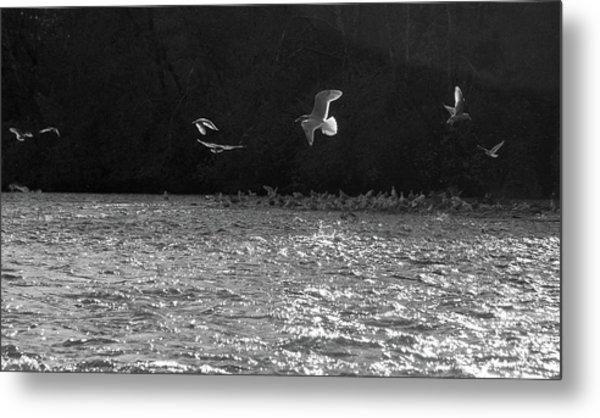 Gulls On The River Metal Print