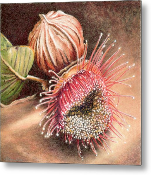 Gumnut And Flower Metal Print by Robynne Hardison