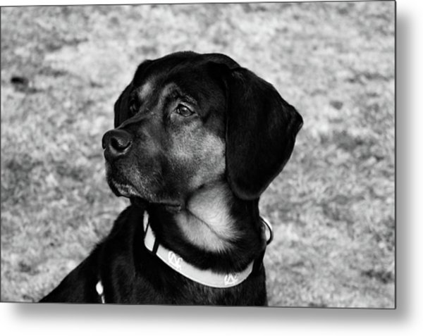 Gus - Black And White Metal Print