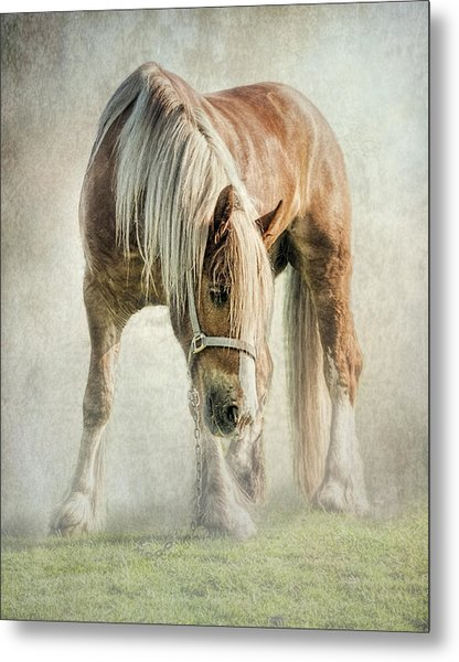 Gypsy In Morning Mist. Metal Print