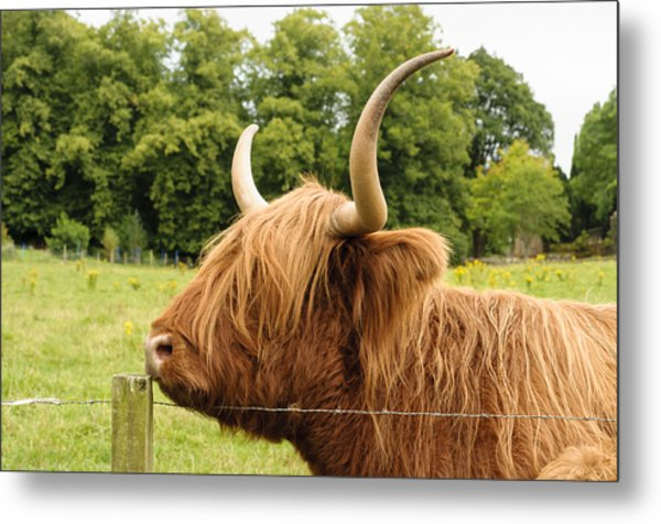Metal Print featuring the photograph Hairy by Christi Kraft