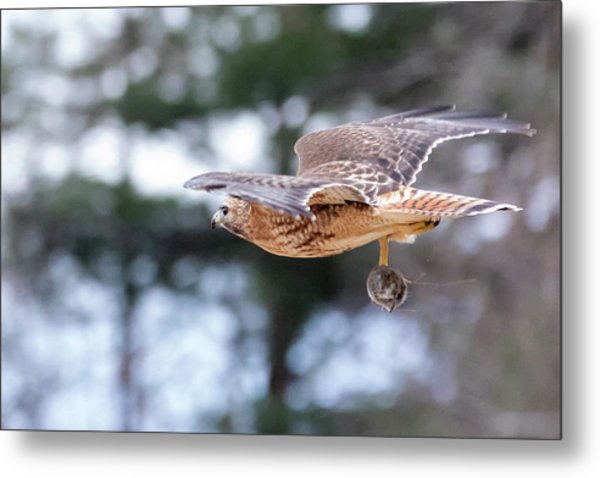 Hal Picking Up Dinner 2 Metal Print