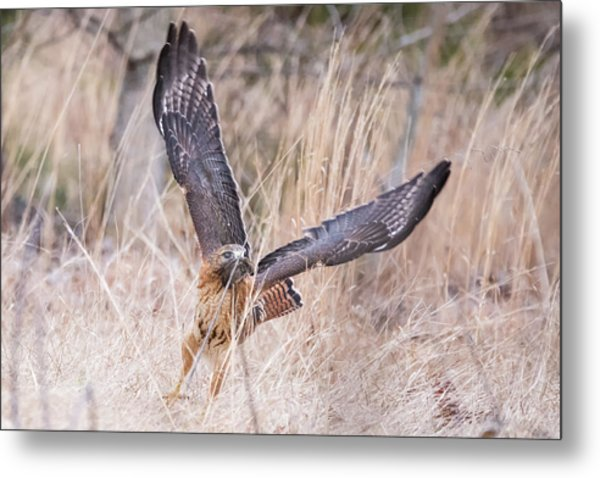 Hal Picking Up Dinner Metal Print