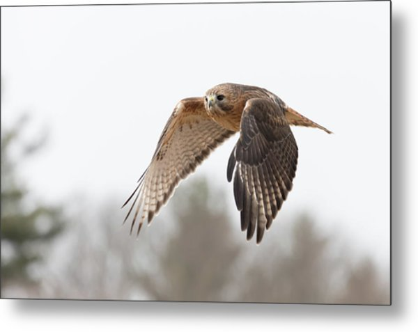 Hal Takes Flight Metal Print