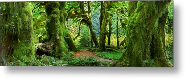 Hall Of Mosses - Craigbill.com - Open Edition Metal Print