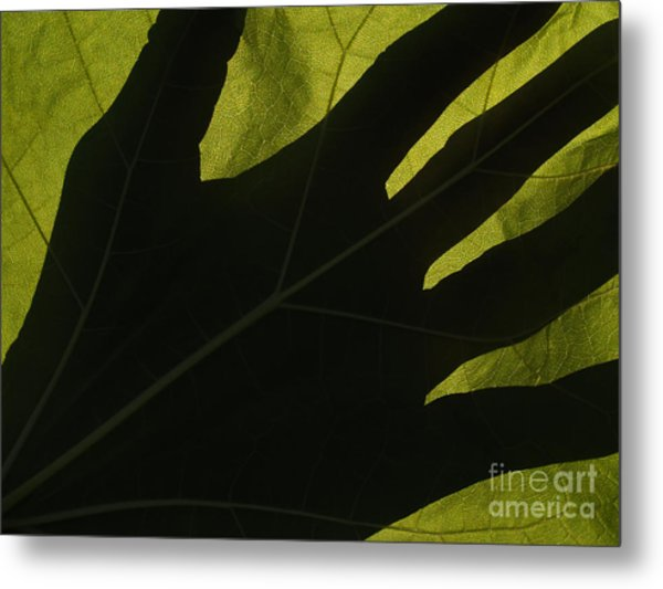 Hand And Catalpa Veins Backlit Metal Print by Anna Lisa Yoder