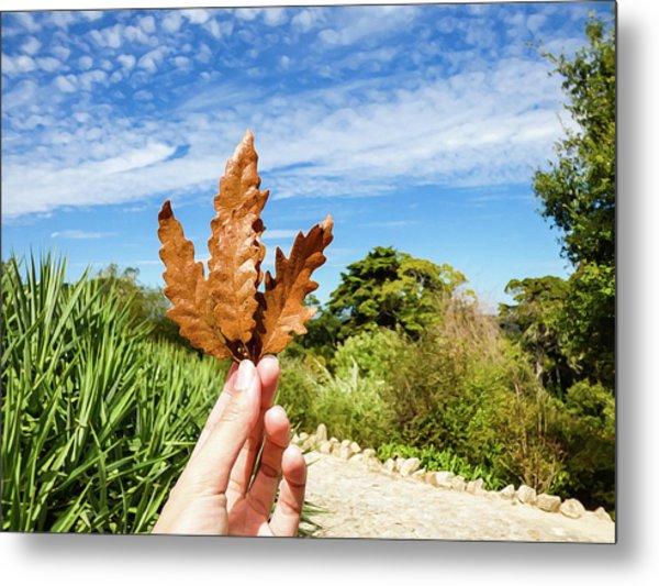 Hand Holding A Beautiful Oak Leaf Metal Print