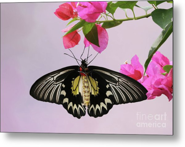 Hanging On V2 Metal Print