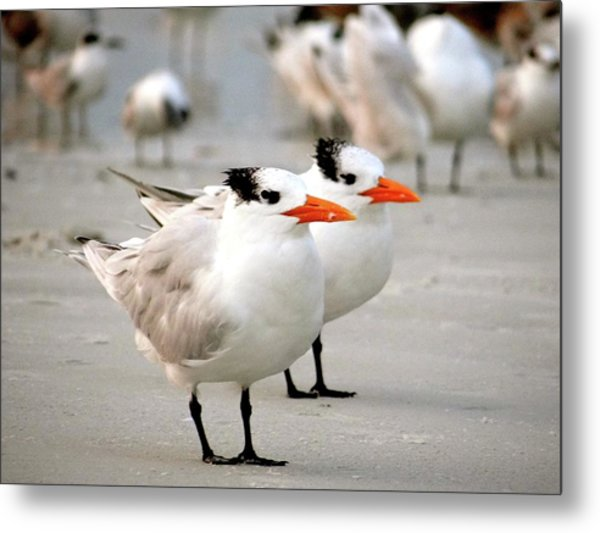 Hanging Out On The Beach Metal Print