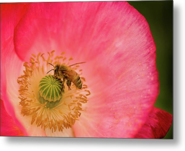 Happy Bee Metal Print