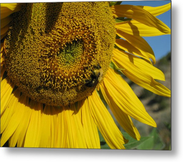 Happy Bumble Bee Metal Print