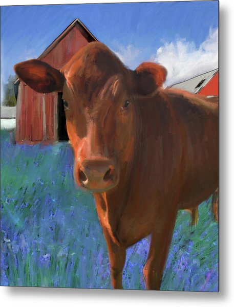 Happy Cow West Marin  Metal Print