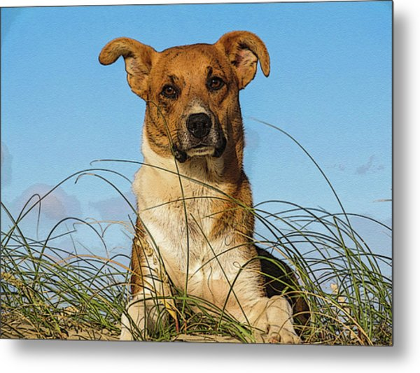 Happy Dog At The Beach Metal Print