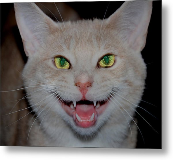 Happy For Spring Cat Metal Print