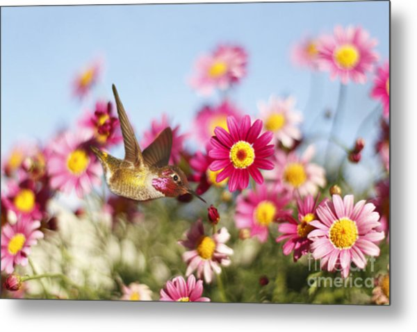 Happy Hummingbird Metal Print