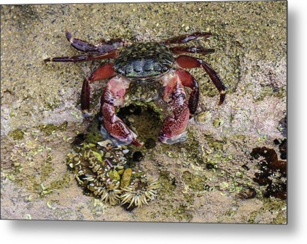 Happy Little Crab Metal Print